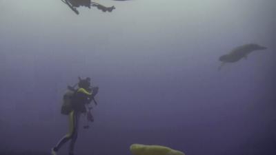 アカウミガメ