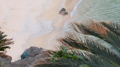 カメの足跡
