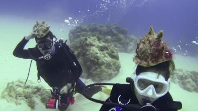 トウカムリ貝