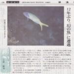 """新聞連載 其の9 「幻の魚""""アオマスク""""」"""