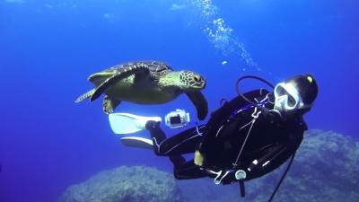 アオウミガメのミサキ