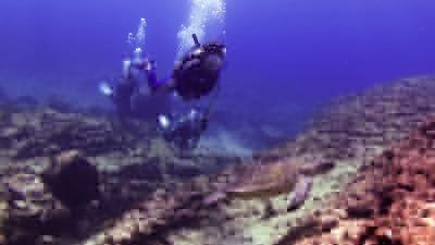ウミガメと一緒