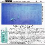新聞連載 其の10 「シワハイルカと泳ぐ」