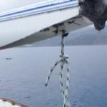 奄美大島南部&加計呂麻ツアー【イルカの群れ】