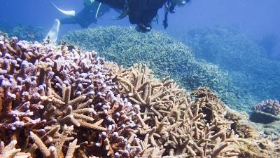 1嘉鉄サンゴ