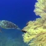 ウミガメパラダイス