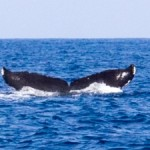 クジラだらけ