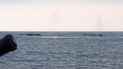 クジラのペアー
