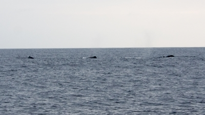 クジラ3頭