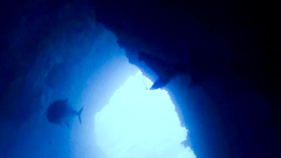 ロウニンとサメ