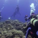 ウミガメ天国の底力