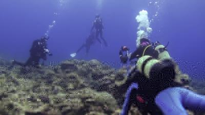 ウミガメ天国