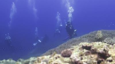 コブシメとダイバー