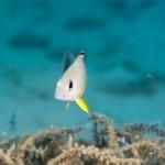 夏を彩る幼魚たち