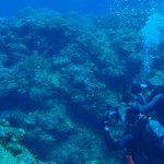 流れの中の【ギンガメアジ】&【イソマグロ】&【アオウミガメ】
