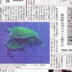新聞に載りました(ウミガメ交尾編)