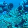 アオウミガメ&ミドリイシサンゴ