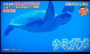 いきなり!黄金伝説SP 沖永良部島に映像提供