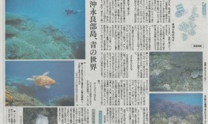 新聞で紹介「沖永良部島」