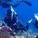 体験ダイビングでカメ4匹&サメ2匹・・