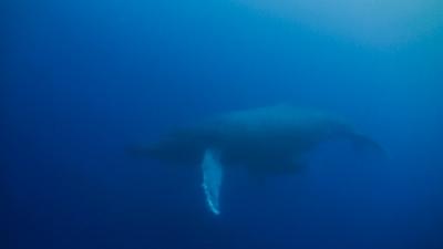 沖永良部島でダイビング中クジラに遭遇