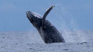 イルカの大群!&クジラ飛ぶ!!