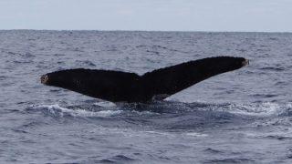 怒涛のクジラ・ラッシュ
