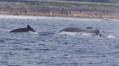 クジラペア