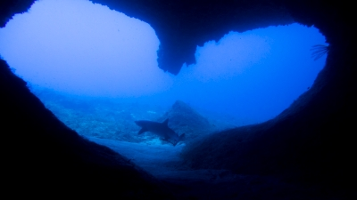 ハートの中のサメ