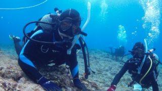 体験ダイビングでウミガメたくさん交尾まで!
