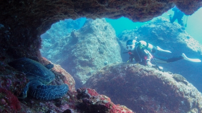 ウミガメのミサキ