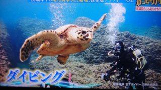 幸せボンビーガール沖永良部島