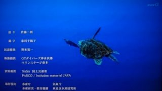 アカウミガメの映像解禁