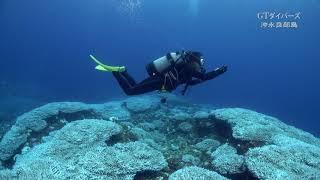 沖永良部島でもサンゴの白化現象