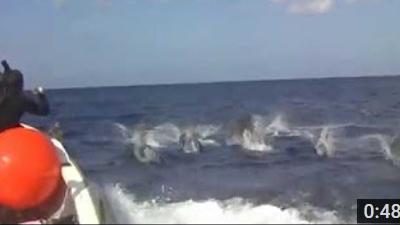 沖永良部島のダイビング動画見渡す限りのハンドウイルカ
