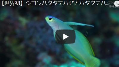 沖永良部島のダイビング動画ハイブリッドヘルフリッチ