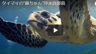 沖永良部島のダイビング動画タイマイ鼻ちゃん