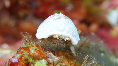 沖永良部島のダイビング水中マクロ