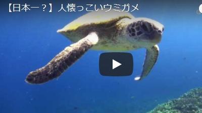 沖永良部島のダイビング動画日本一人懐っこいウミガメ
