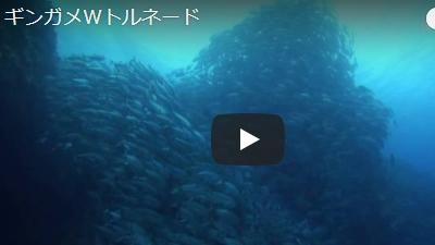 沖永良部島のダイビング動画GTダイバーズ撮影