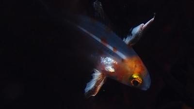 沖永良部島のダイビング水中写真