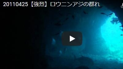 沖永良部島のダイビング動画GTダイバーズ