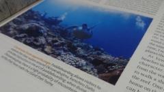 沖永良部島のダイビング取材
