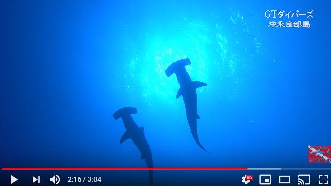 沖永良部島でダイビング