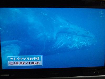 P4280006クジラです