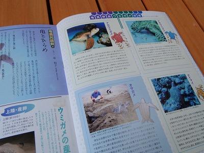 PC220002ウミガメ図鑑