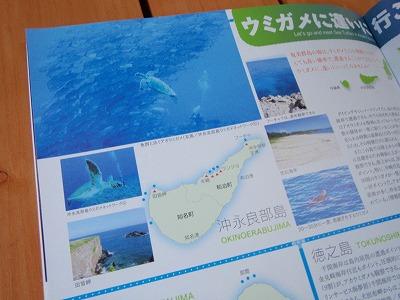 PC220003アオウミガメとギンガメアジ